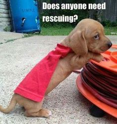Does anyone need rescuing? #superhero #Dogs