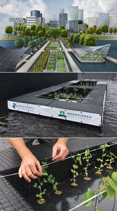 Design thinking by nexus product design: the first prototype of Floating Food Farm is launched at Wageningen University BioScience Center in Lelystad.