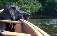 How to Take Your Pooch Canoeing