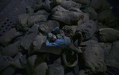 Una pausa sui sacchi di carbone di una fabbrica siderurgica a Jammu, in India. (Mukesh Gupta, Reuters/Contrasto)