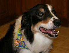 Como hacer pañuelos para perros