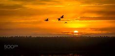 Follow me Sun -