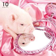 THE PIG PINK   Artlist Collection CALENDAR 2016