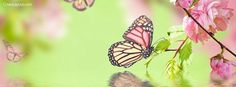Butterfly Spring Facebook Cover coverlayout.com