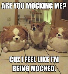 visit our page and find all pics that you love and want [link] Funny-corgi-stuffed-animals Humor Animal, Funny Animal Memes, Animal Quotes, Cute Funny Animals, Funny Cute, Funny Dogs, Funny Shit, Funny Stuff, Funny Puppy Memes