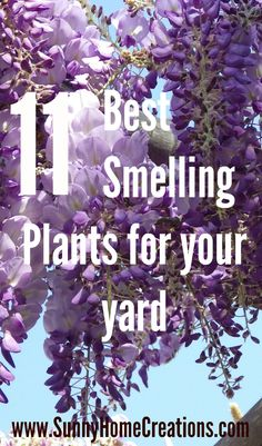 11 Best smelling plants for your yard  I think I should plant #5 next to our garbage can storage area.  It would help hide the ugly and make it smell better.