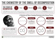 Chemistry of Decomposition