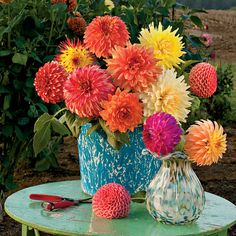dazzling dahlias...El Adobe, if only the budget was unlimited ;-)