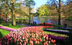 Spring flowers bloom in Keukenhof, Netherlands.