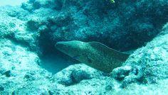 amami diving  http://www.marineblue-kakeroma.com/diving/photo/15