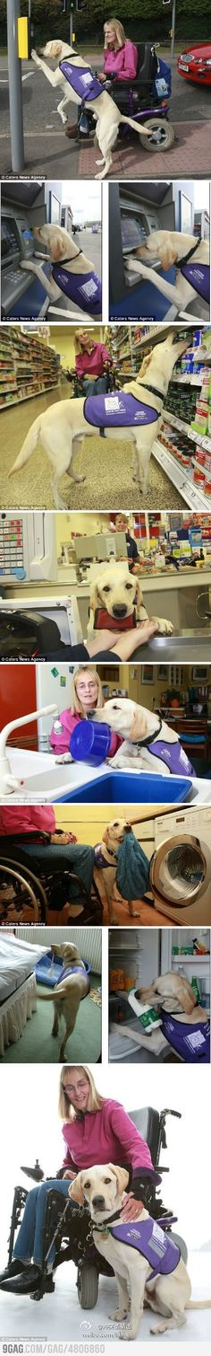 Lady with MS and her service dog. He is truly amazing.