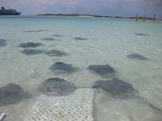 Castaway Rays on Castaway Cay