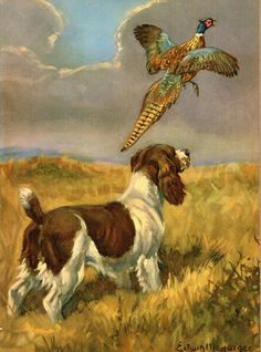 """Check out our site for more info on """"spaniel dogs"""". It is actually an exceptional location to learn more. Hunting Painting, Hunting Art, Hunting Dogs, Hunting Quotes, Hunting Humor, English Springer Spaniel, Dog Artwork, Pheasant Hunting, Vintage Dog"""