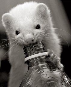 Just a sip....K!