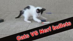 Katy & Alaska VS Kitten playing with Nerf bullets