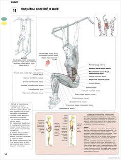 11. Подъемы коленей в висе