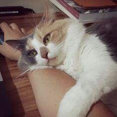 Gatos não ligam para o dono, eles gostam mesmo é da casa. | 18 motivos para você nunca ter um gato
