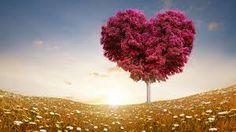 Bildergebnis für Love