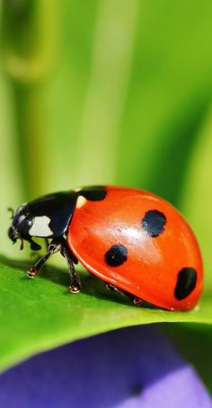 A ladybird close up - Animals Pictures Wild Animals Photography, Insect Photography, Close Up Photography, Close Up Art, Animal Close Up, Close Close, Pictures Of Insects, Cool Insects, Insect Art