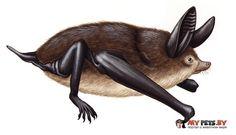 Палеонтологи нашли гигантскую бегающую летучую мышь