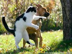 Dopo il Tae Kwon Do, il Cat Won Dog!