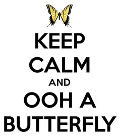 KEEP CALM AND OOH A BUTTERFLY