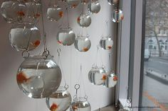 Hanging fish bowls- probably not the best environment for the fish but it looks amazing