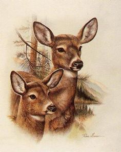 Wildlife Paintings, Wildlife Art, Animal Paintings, Animal Drawings, Deer Drawing, Deer Pictures, Deer Art, Wood Burning Art, Pyrography