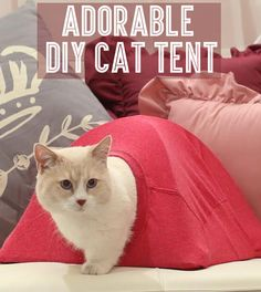 This is the cutest damn cat tent of all time that you can diy video tutorial Diy Cat Tent, Diy Tent, Tent Craft, Diy Old Tshirts, Old T Shirts, Crazy Cat Lady, Crazy Cats, Niche Chat, Cat House Diy