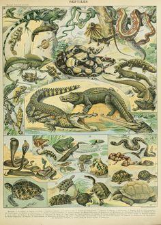 Nouveau Larousse illustré : Reptiles