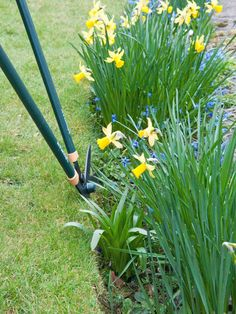 Trim Grass at Edges Safely with Edging Shears