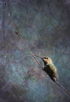 Belinda Greb, Photographer - Looking For Monet 2 Photograph