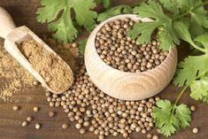 ezilmiş kişniş tohumları