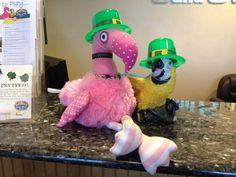 Patsy and Paulie celebrating St. Patrick's Day in Punta Gorda, Florida