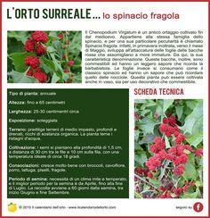 Lo spinacio fragola