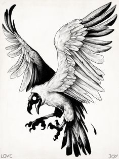 Vulture study by evanlovejoy (TUMBRL) Tattoo Sketches, Tattoo Drawings, Art Sketches, Art Drawings, Tattoo Art, Animal Sketches, Animal Drawings, Rabe Tattoo, Petit Tattoo