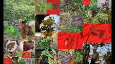 Folk Rice Formulations for Hair Loss: Pankaj Oudhia's Medicinal Plant Da...