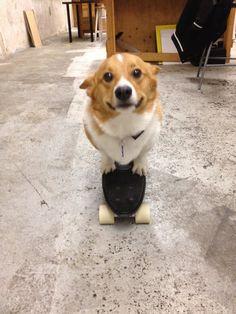 I can has skateboard?