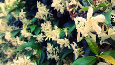 I fiori che non colsi - 11 giugno 2013