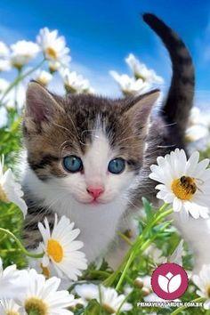 Você acha que gatos e flores combinam? Nós temos certeza que sim. O que não combina com nada é gato abandonado, vocês não acham? #primaveragarden #flores #gatos #floricultura #adoteumgato