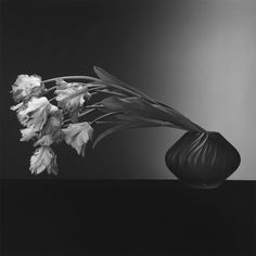 """""""He said he did flowers because he didn't know any people who would sit as long as he wanted."""" —Photographer Judy Linn on Robert Mapplethorpe this week at the Getty Center Parrot Tulips, Robert. Patti Smith, Black And White Portraits, Black And White Photography, Still Life Photography, Art Photography, Photography Flowers, School Photography, Inspiring Photography, Robert Mapplethorpe Photography"""