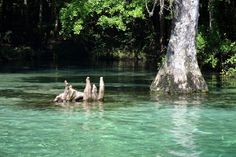 Ponce de Leon Springs - a guaranteed way to cool off, and a nice opportunity for snorkeling