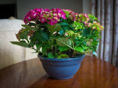 5 комнатных растений с самыми массивными соцветиями. Список названий растений с крупными соцветиями с фото - Ботаничка.ru - Страница 6