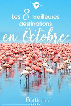 #Argentine #Grèce #Laos ... 8 destinations phares où partir en octobre ! Destination Soleil, Argentine, Voyage Europe, Digital Nomad, Laos, Destinations, Dreams, World, Travel
