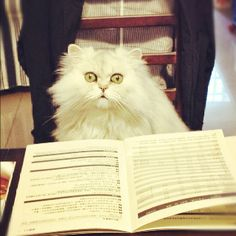 The secret's out! Fluffy, literary, white cats named Oz can be little lions too! #NYPLLittleLion