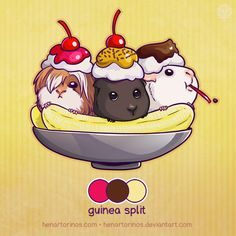 Guinea Pig Split. Someone already ate the cherry! I love this <3