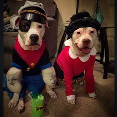 Popeye and Olive Oyl Dog Costume Olive Oyl Halloween Costume, Halloween Costume Contest, Halloween Fun, Best Dog Costumes, Pet Costumes, Clever Costumes, Popeye Costume, Popeye And Olive, Animal Fashion