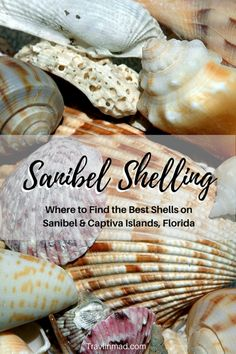 Where can you find the best beaches for shelling on Sanibel Island Sanibel Island beaches in southwest Florida are teeming with gorgeous seashells. Heres your ultimate guide to Sanibel shelling how when where to find the best beaches and the most shells. Visit Florida, Florida Vacation, Florida Travel, Florida Beaches, Sanibel Florida, Usa Travel, Clearwater Florida, Sarasota Florida, Sanibel Beach