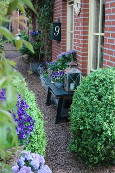 buxussen, hortensia's, viooltjes, wilde wingerd......,