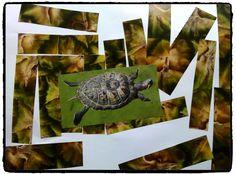 collage animaux du zoo, tortue, enfant